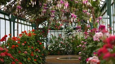 Los Invernaderos Reales de Laeken y su colección de plantas