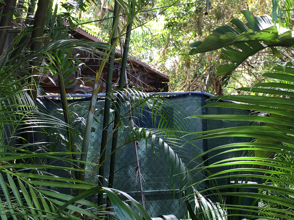 The Rumor Mill Is A Jurassic Park Roller Coaster Coming To Islands Diagram Green Construction Walls Went Up Around Old Triceratops Encounter Plot And Some Land Clearing Has Started Inside Weve Found Lots Of Props From