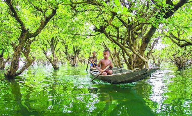 Ratargul Swamp Forest Sylhet, Bangladesh