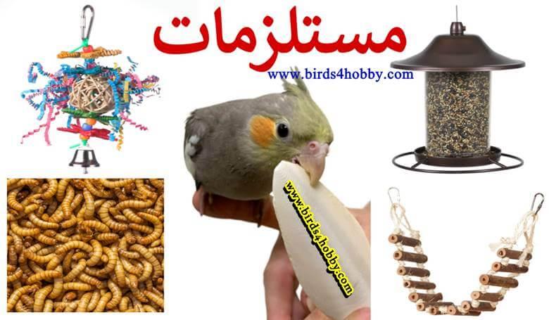موقع لبيع مستلزمات طيور الزينة