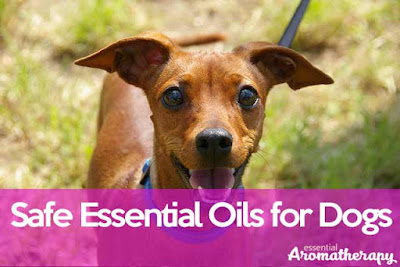 What Essential Oils Are Safe For Dogs