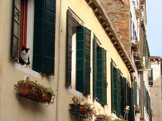 cats of venice