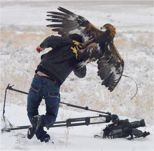 golden-eagle-attacks-cameraman-1.jpg