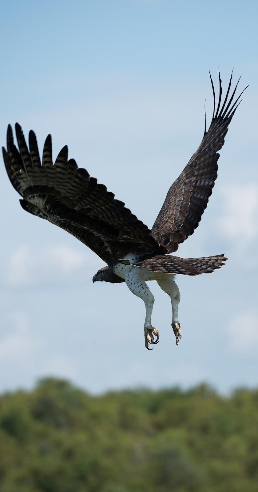 Bird flight.