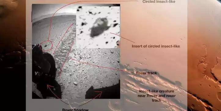 Εξωγήινα Έντομα που Ζουν στον Αρη
