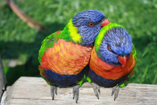 Wörterliste Vogel, Worte die Vogel beinhalten, Vogel Aktivierungsideen, Seniorenarbeit