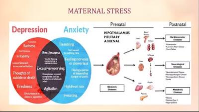 tahapan stres yang dialami oleh ibu hamil
