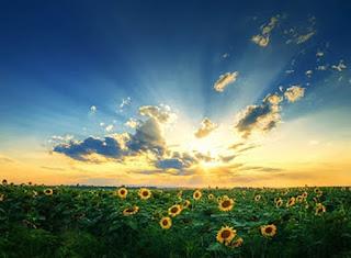 خلفيات سماء رائعة جداً مع زهور عباد الشمس