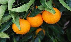 trith-stis-eisagwges-portokaliwn-sth-germania-h-ellada