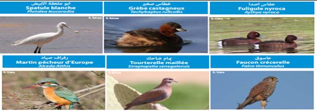 صورة 2: بعض أنواع الطيور الموجودة بضاية دار بوعزة (المصدر : كتيب ضاية دار بوعزة، تراث طبيعي يجب الحفاظ عليه)