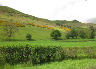 Yellow gorse in bloom on the hillsides near the English-Welsh border.