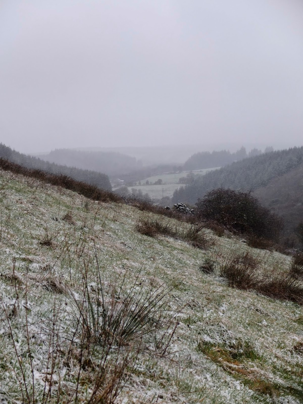 Snowy and foggy valley in the Boggeragh Mountains.