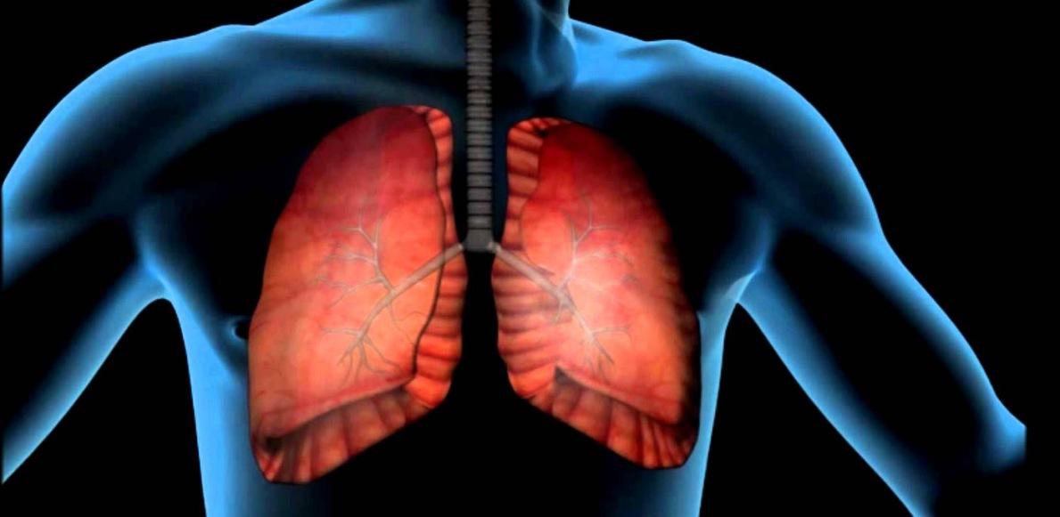 Fisiología (IV): el aparato respiratorio - Biología