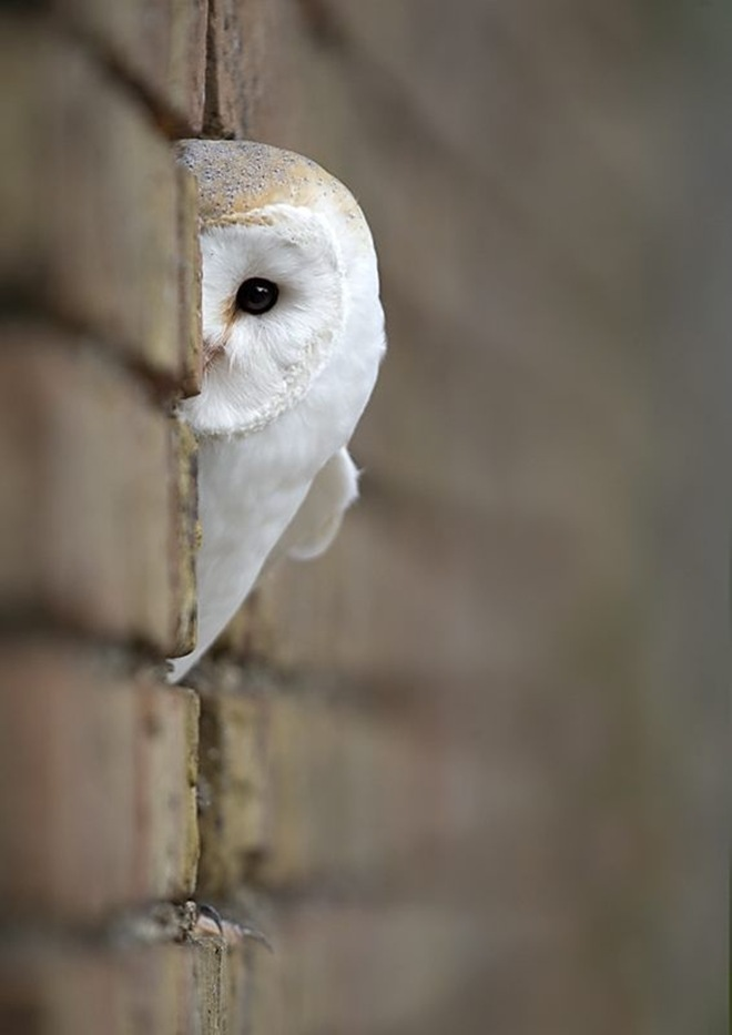 Funny Image Collection Animals Amp Birds Backgrounds