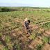 Agricultor familiar receberá recurso do Garantia Safra a partir de fevereiro
