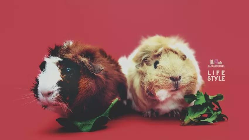 Pets life: i porcellini d'India sono una fregatura