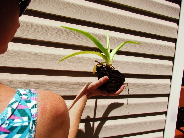 A Woman in a tropical pink and green tank top with sunglasses holding a baby aloe vera plant backwards in a seaside fishing village in Florida with a textured wall