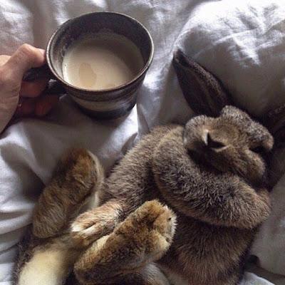 cara merawat kuku kelinci