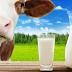 Sữa bột kém chất lượng, giải pháp nào cho trẻ nhỏ?