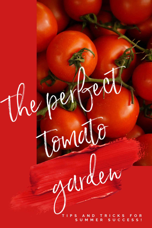 PERFECT TOMATO GARDEN