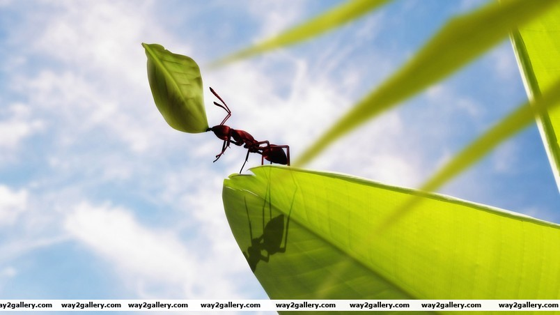 Powerful ant wallpaper