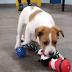 ΧΡΙΣΤΟΥΓΕΝΝΙΑΤΙΚΑ ΔΩΡΑ! Τι έκανε μια οργάνωση για τους αδέσποτους σκύλους