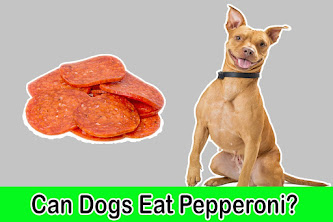 can dogs eat pepperoni, can dogs have pepperoni, pepperoni and dogs