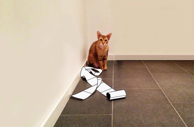 Katzenlady Haustier erziehen Liebe süße Katzenbilder Katze klaut Klopapier Katzenklo Katze Klo beibringen