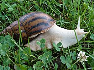 ENVIRONMENT SUITABLE FOR REARING SNAIL.