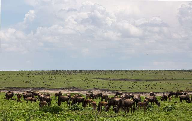 top 10 best places to explore in africa, ngorongoro conservation area, ngorongoro conservation area tanzania, hotels in ngorongoro conservation area, africa map, africa, african, africa country, african countries, africa flag, african grey parrot, african elephant, africa song, africa twin, africa capital, african union, africa time, africa currency, african parrot, africa jungle,