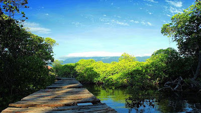 hutan mangrove, gili sulat, gili sulat lombok, wisata lombok, tempat wisata lombok