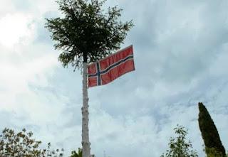 Norway Spruce Flagpole