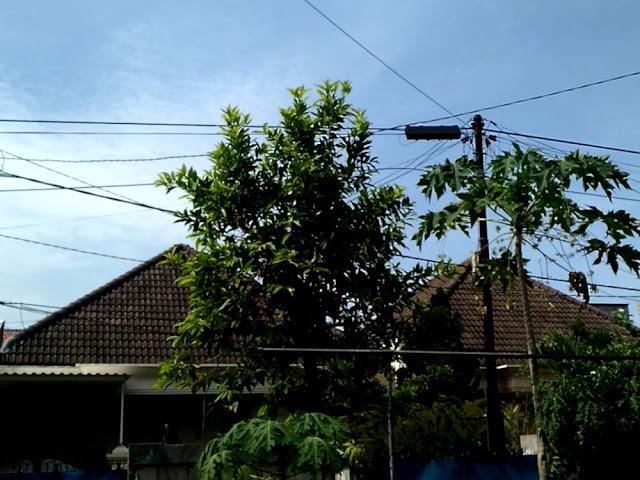 Daun pohon menyampah dan merambah ke mana-mana