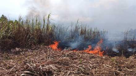 Kebun Tebu Terbakar