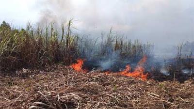 Kebun Tebu Terbakar, Petani Purworejo Rugi Puluhan Juta Rupiah