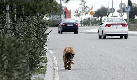 perro abandonado popr la carretera