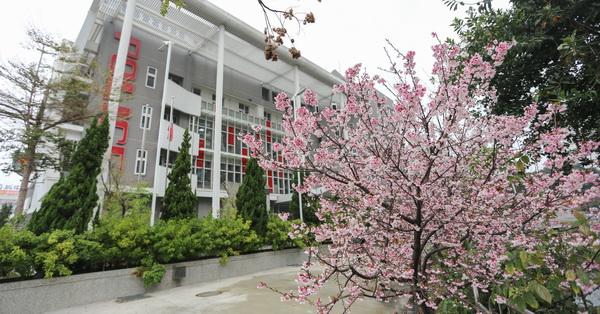 台中北屯|四平派出所不只外觀新潮,外面也有漂亮的粉色櫻花