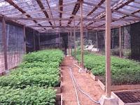 Cara Jitu Budidaya Tanaman Dengan Mengombinasikan Paranet Pada Greenhouse