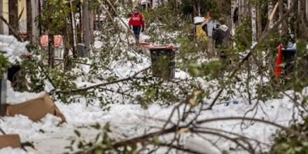Ισπανία: Κλωνοποιούν δέντρα μετά την χιονοθύελλα