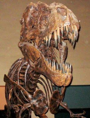 Reconstrucción de un Tiranosaurio Rex