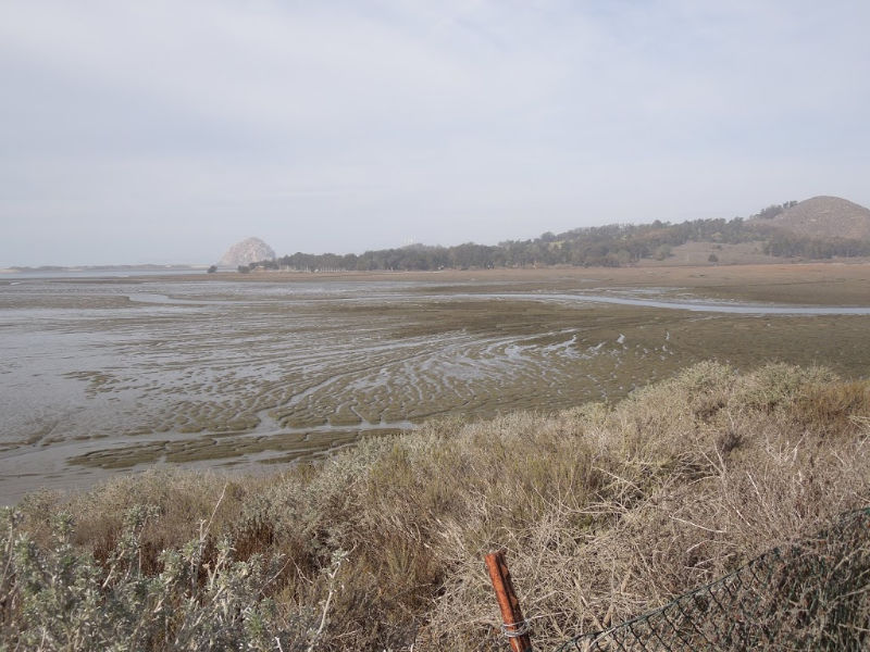 The Elfin Forest in Los Osos, California: A Review in Photos - View of Estuary