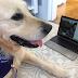 Κορωνοϊός: Θεραπευτικοί σκύλοι κάνουν εικονικές επισκέψεις σε άρρωστα παιδιά