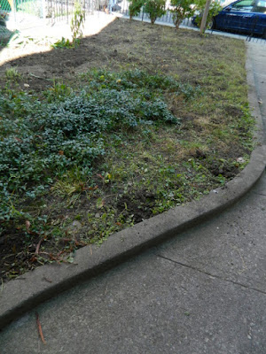 Little Italy Fall Front Garden Cleanup After by Paul Jung Gardening Services--a Toronto Gardening Company