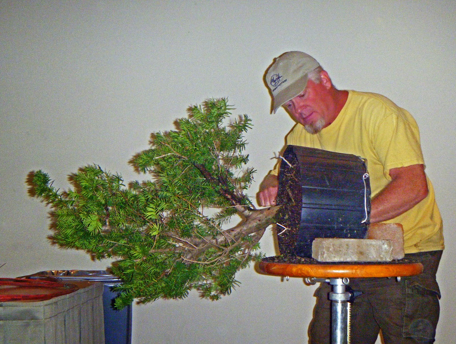 Bonsai In Hoosierland Mid America Show 2014 Part 3 The Wiring Yew Getting Things Ready To Turn This Into A Semi Cascade August 16