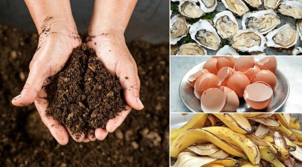 metode ciudate de a hrani solul