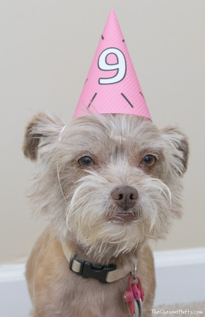 Bailey with a party hat