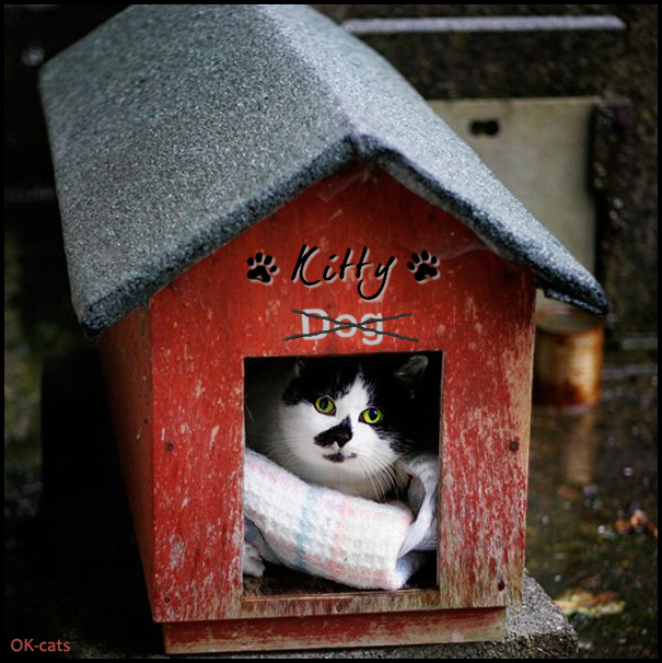 "Photoshopped Cat Picture • Cats rule the World • Kitty says ""The døg house is mine right Meow!"""
