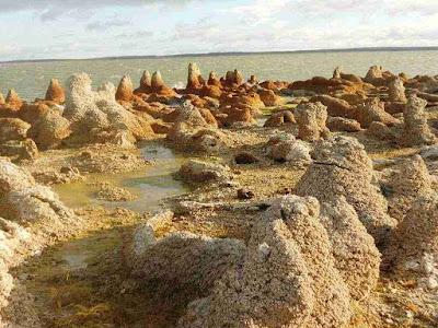 Stromatolites in Porvenir, Chile.