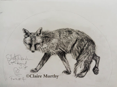 british wildlife sketches