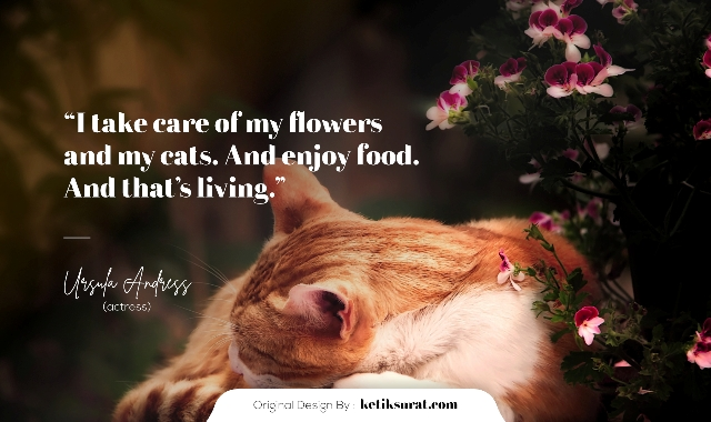 quotes about cat dan artinya